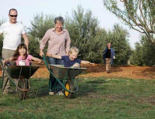 Olivenöl-Produzenten in Istrien  Teil 1: BRIST / Vodnjan